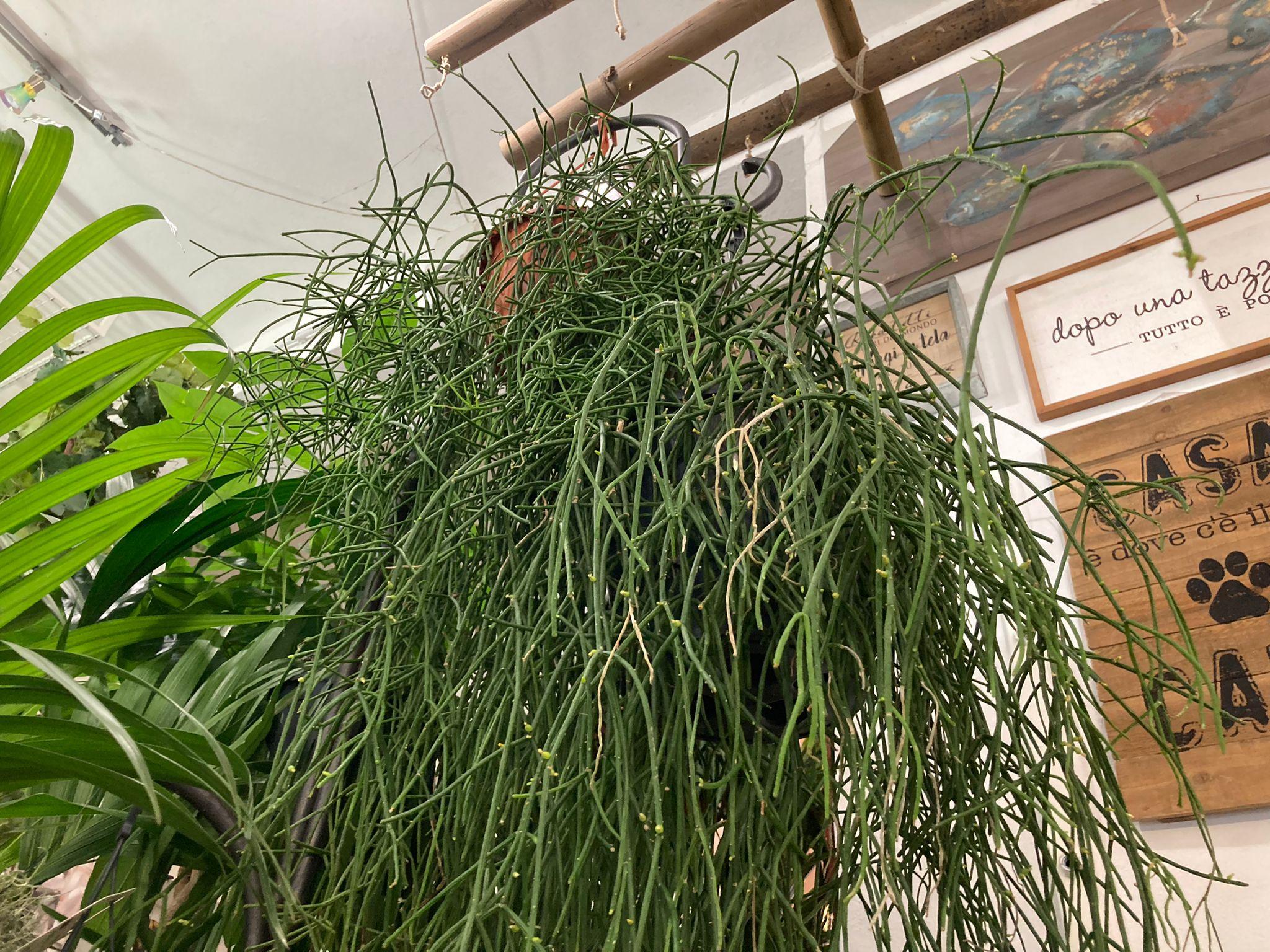 fiorista livorno noleggio piante